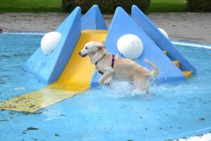 Doggy Day Kom zwemmen met je hond